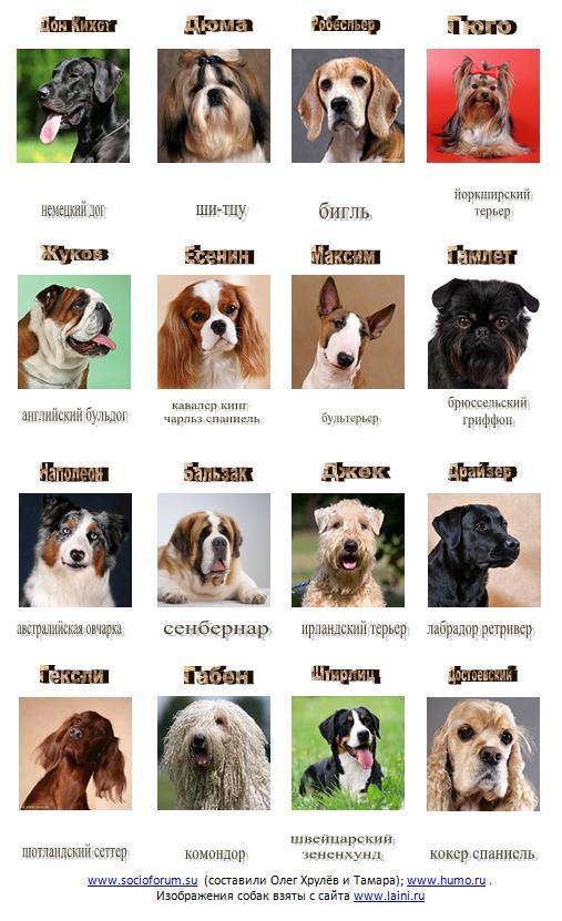 Раскраска, картинки породы собак с названиями на русском